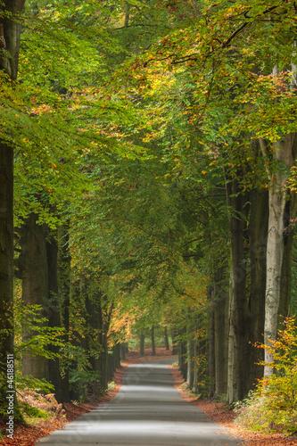 jesienna-droga-w-holenderskim-parku-narodowym-veluwe