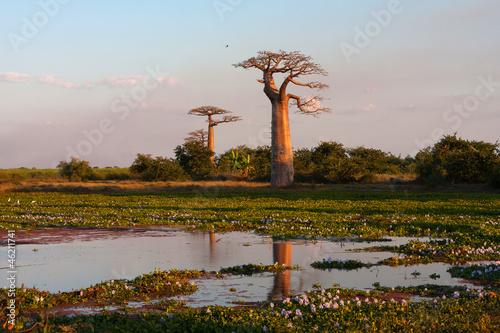 Recess Fitting Baobab Baobab alley, Madagascar