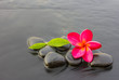 Spa stones and frangipani flower purple