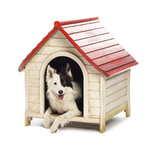 Border Collie In A Kennel Against White Background