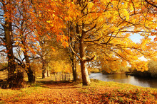 Beautiful Autumn In The Park, ...