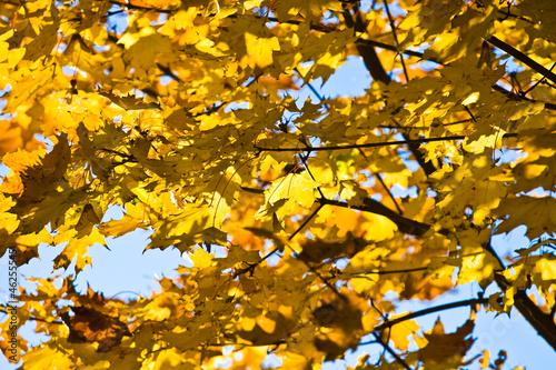 Fotografie, Obraz  Liście jesienią