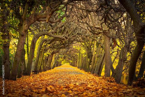 Obraz Jesienna aleja w parku w Gdańsku - fototapety do salonu