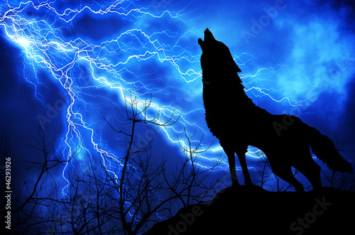 Fotografía  wolf in silhouette howling to thunderstorm
