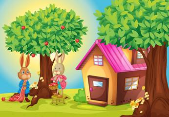 Obraz na płótnie Canvas rabbit and house
