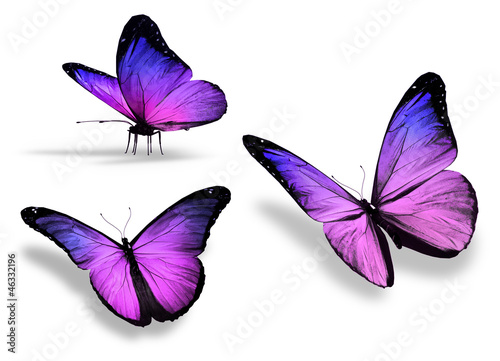 Fototapeta  Three violet butterfly, isolated on white background