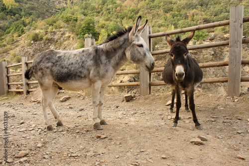 Fotografia pair of donkeys waiting on dusty road