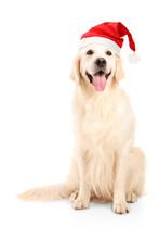 A Studio Shot Of A Dog Wearing A Christmas Hat
