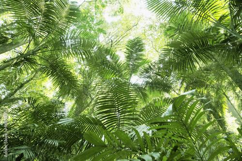 Obrazy dżungla   tropenwald