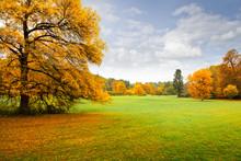 Panorama. Lonely Beautiful Autumn Tree. Autumn.