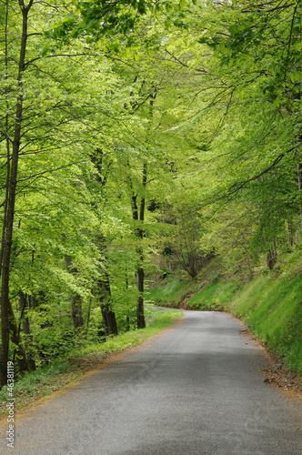 Photo  France, the road of Mont Saint Odile Monastery