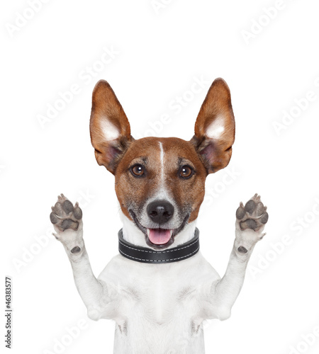 Deurstickers Franse bulldog silly crazy paws up dog