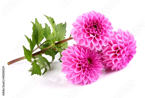 Foto op Plexiglas Dahlia Beauty dahlia on a white background