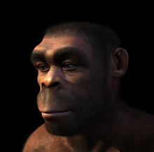 Homo Erectus Portrait