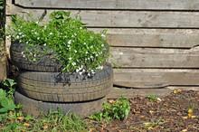 Recycled Car Tyre Garden Planter