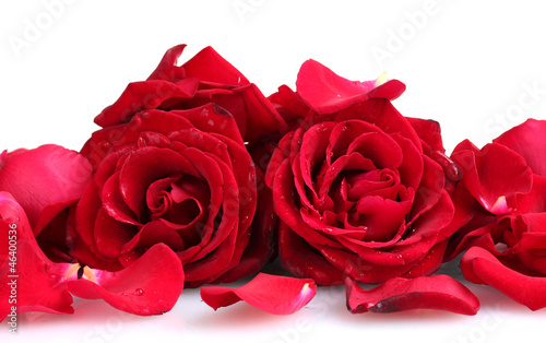 Papiers peints Roses beautiful red roses and petals isolated on white