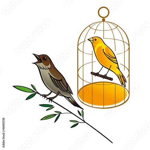 In de dag Vogels in kooien Nightingale and Canary in the golden cage