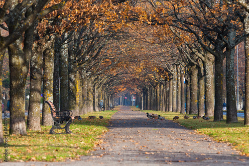 Fototapety, obrazy: Colorful autumn foliage scenery