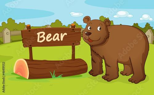 Wall Murals Bears bear