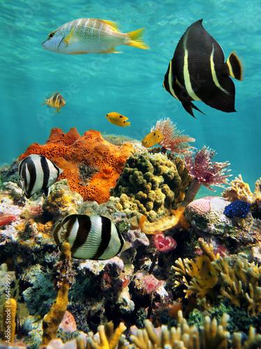 rafa-koralowa-i-tropikalna-ryba-z-powierzchnia-wody