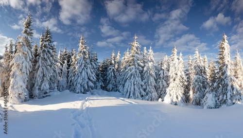 piekny-zimowy-krajobraz-w-lesie