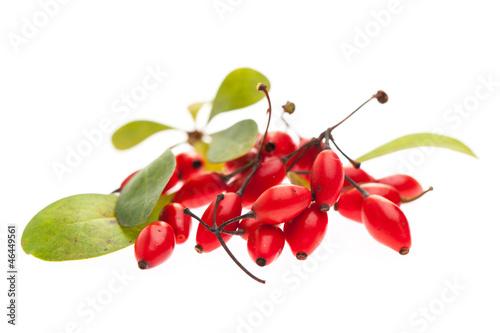 Photo Berberitze (Berberis vulgaris) rote Beeren und Blätter auf wei
