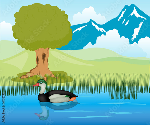 Duck sails in pond