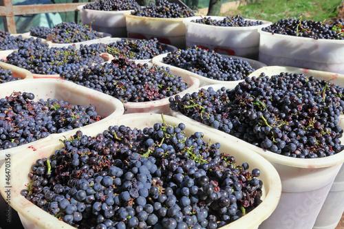 Fotografiet  Baskets of wine grapes