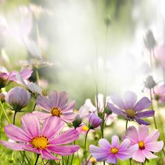 Fototapetakwiaty