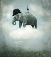 Fototapeta Słoń Fantasy elephant flying
