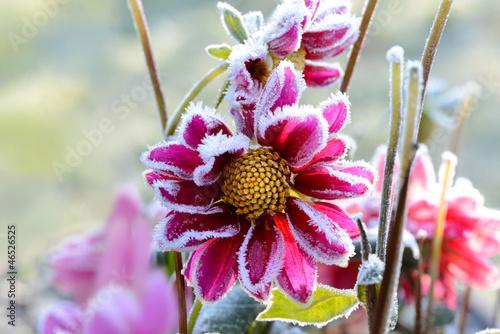 Foto-Duschvorhang - Blumen 255