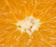 orange as the background. macro