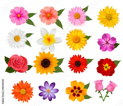 Big set of beautiful colorful flowers. Vector illustration Wallpaper Mural