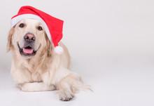 Golden Retriever Xmas Dog