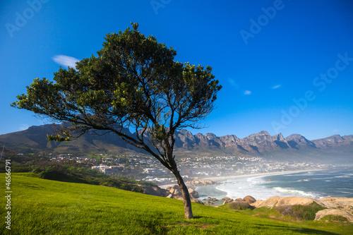 Foto  Grass and Blue Sky