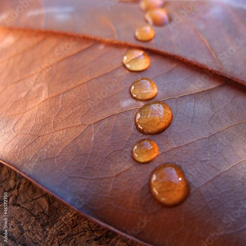 slodycz-jesieni