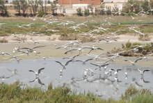 Réserve Ornithologique Lagune...