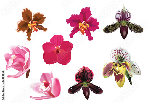 Tuinposter eight isolated orchid flowers on white