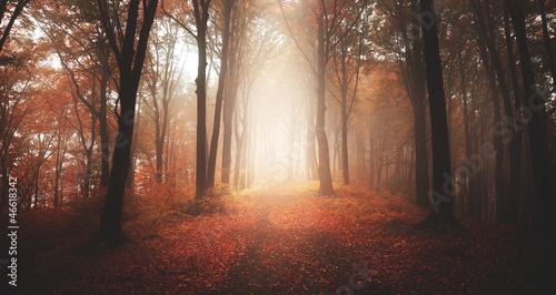 Spoed Foto op Canvas Grijze traf. Autumnal foggy forest