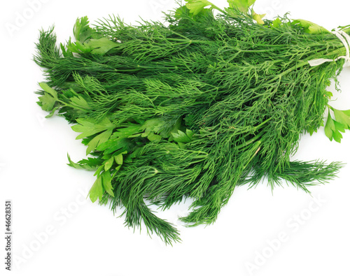 Garden Poster Plant Dill and parsley isolated on a white background