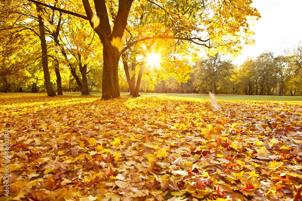 Fototapety, obrazy: Jesień