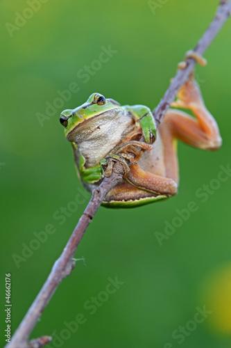Tuinposter Kikker Frog