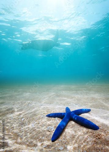 Stampa su Tela Blue starfish deep underwater