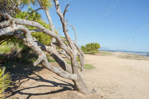 Fotografia, Obraz  Windswept tree