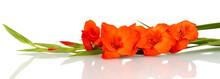 Branch Of Orange Gladiolus On ...
