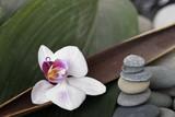 Fototapeta Bambus - Orchidee