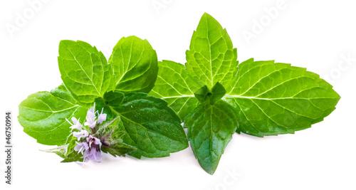 Obraz Leaf of mint with flower - fototapety do salonu
