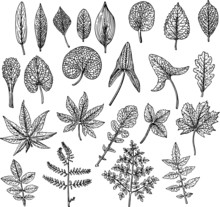 Many Different Leaves