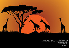 Silhouettes Of Giraffes In Saf...