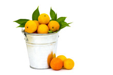 Fresh Tangerines In The Bucket